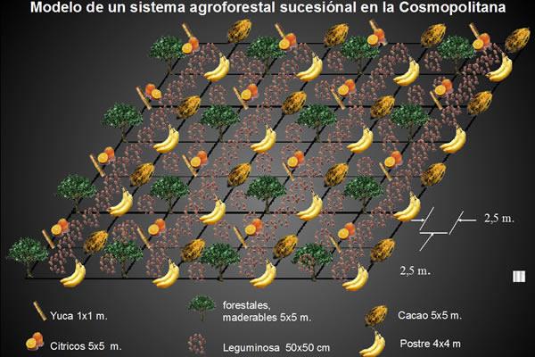 Taller Sobre Sistemas Agroforestales